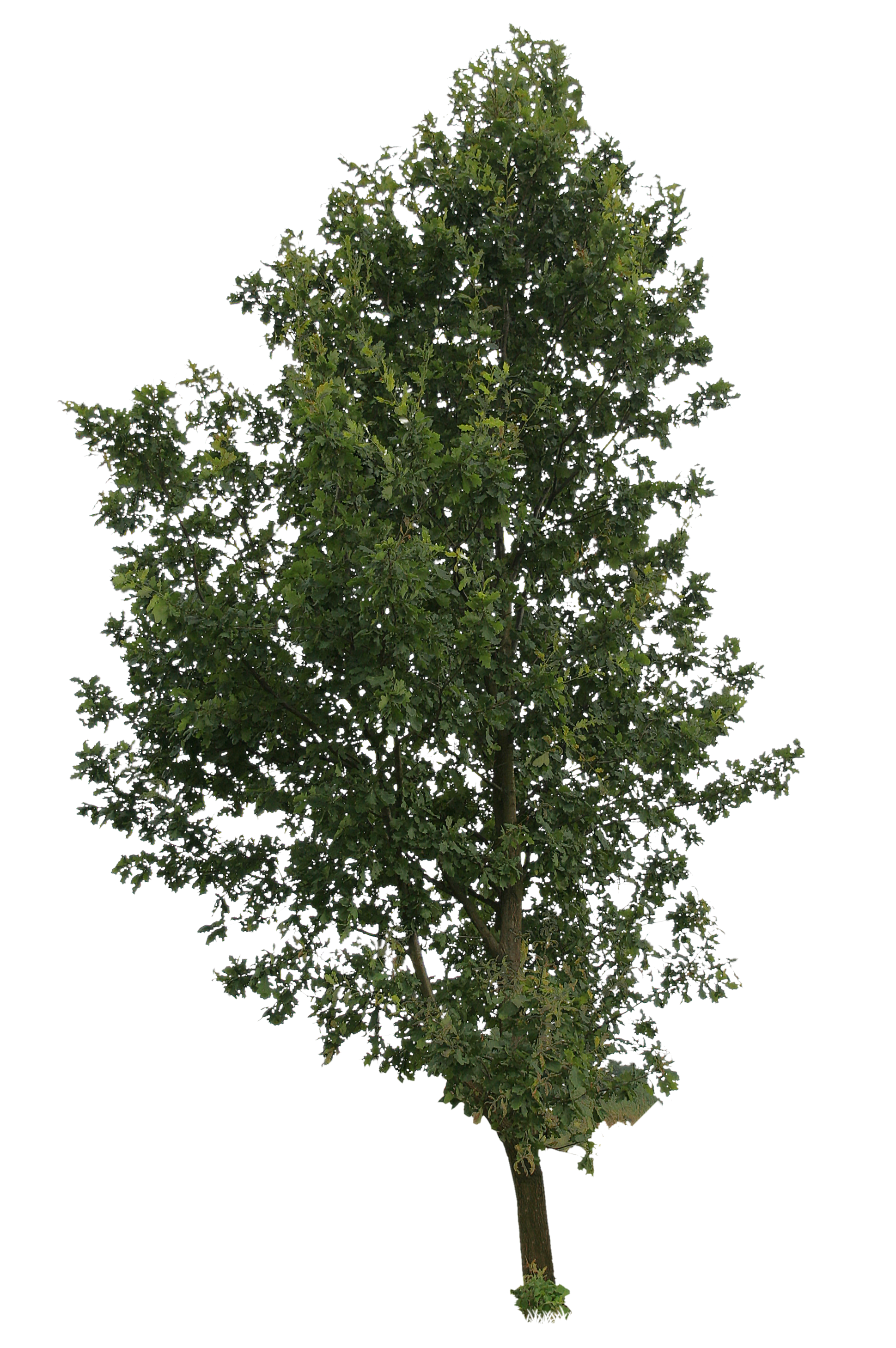 High tree free people. Europe clipart cut out