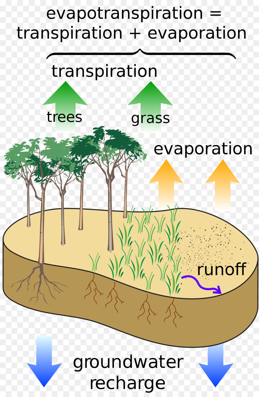 Grass cartoon water tree. Evaporation clipart soil