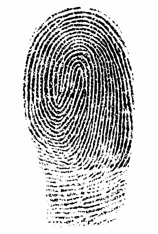 Fingerprint png image . Evidence clipart crime evidence