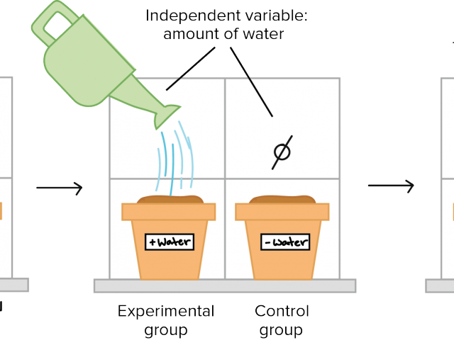 Way control science . Experiment clipart controlled experiment