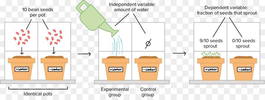 Experiment clipart controlled experiment. Science cartoon research text