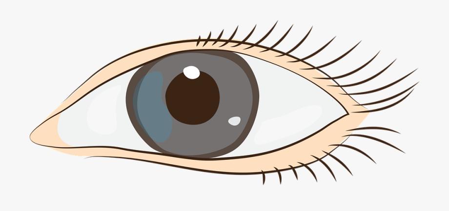 Eyes face clip art. Eyeballs clipart sight