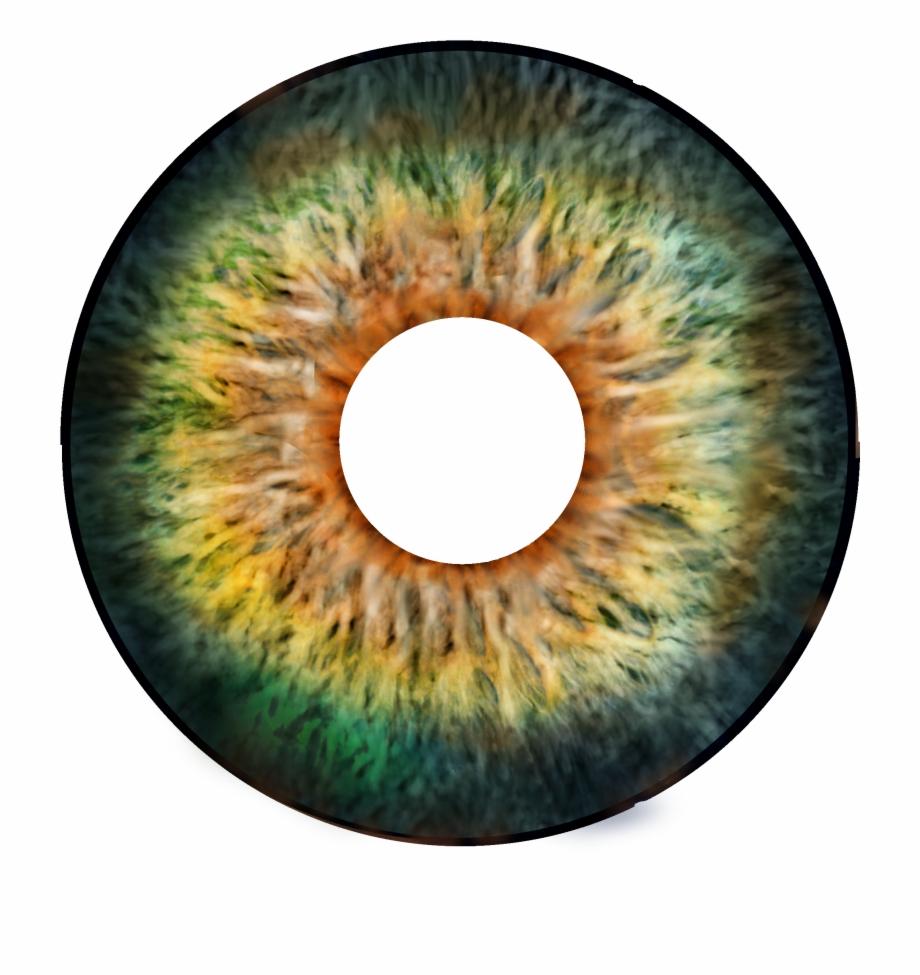 Eyeball eye forward circle. Eyeballs clipart real