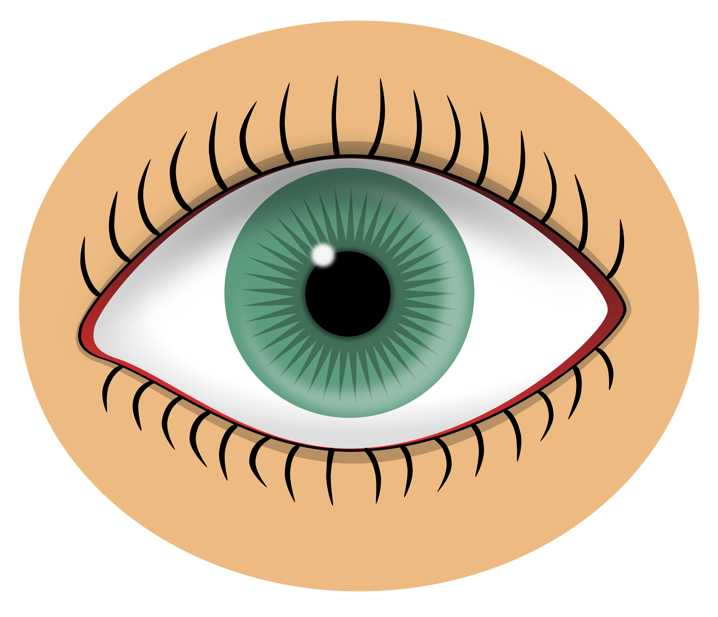 Eyeball clipart eyelash. Blue eye big image