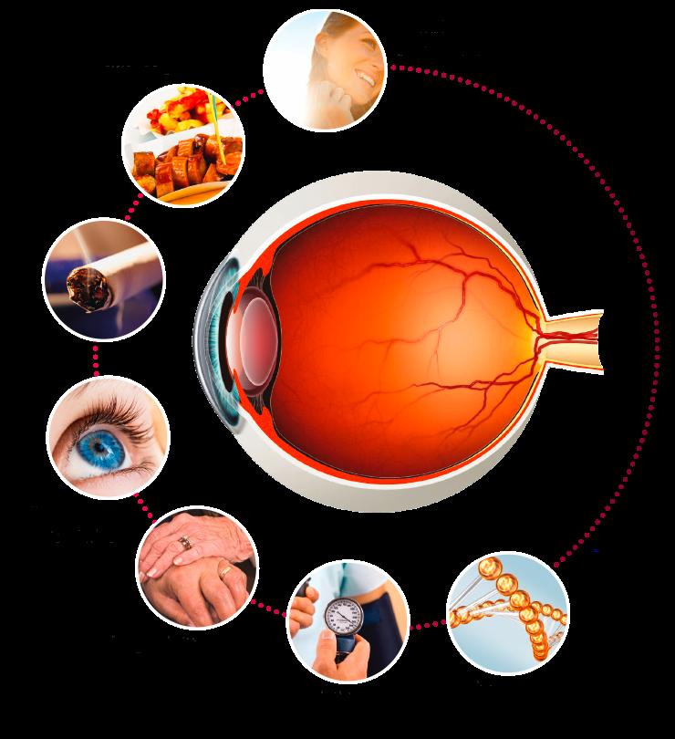 Ocular vitamins ursapharm arzneimittel. Vision clipart healthy eye
