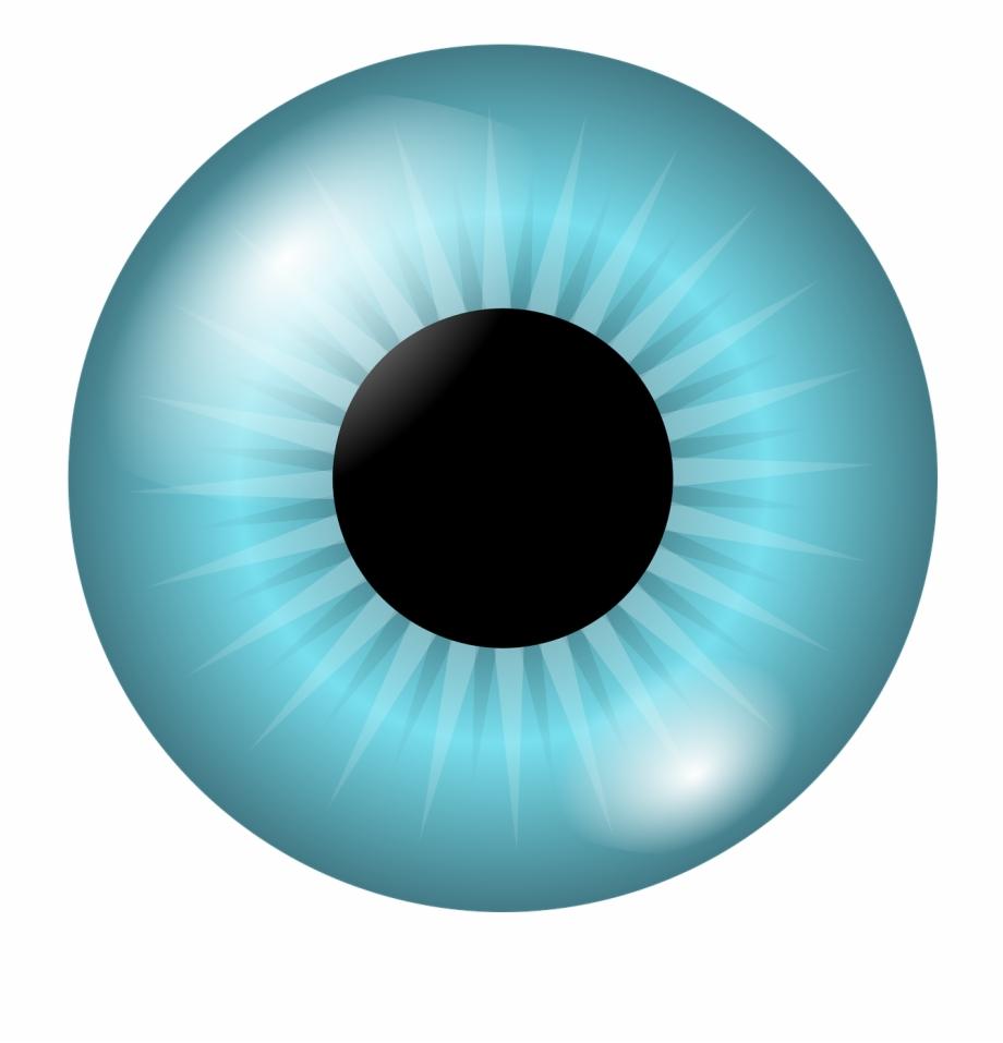 Iris looking vision png. Eyeball clipart pupil eye