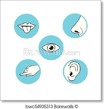 X free clip art. Eyeball clipart sense sight