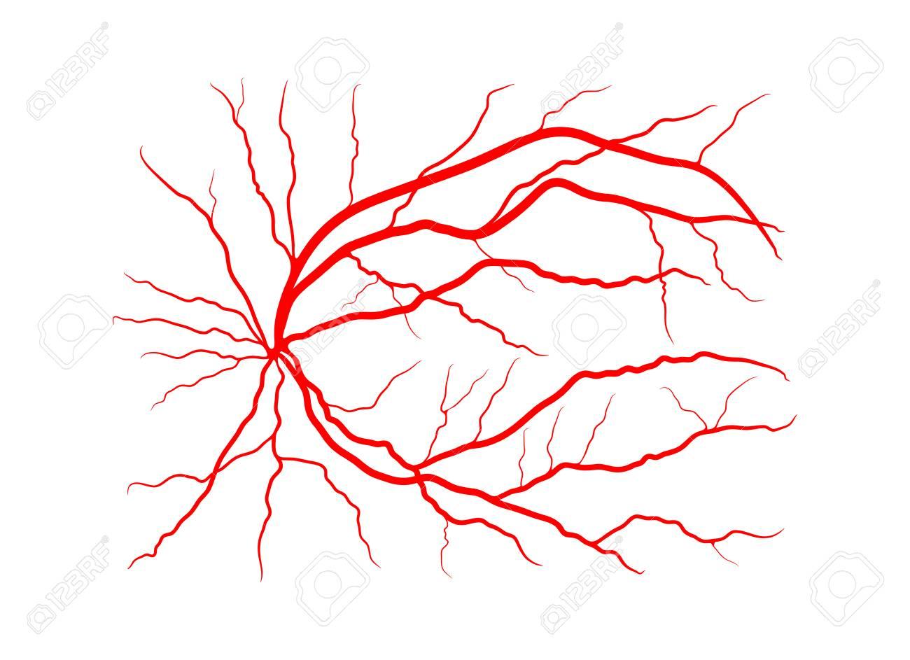 Eyeball clipart vein. Free download clip art