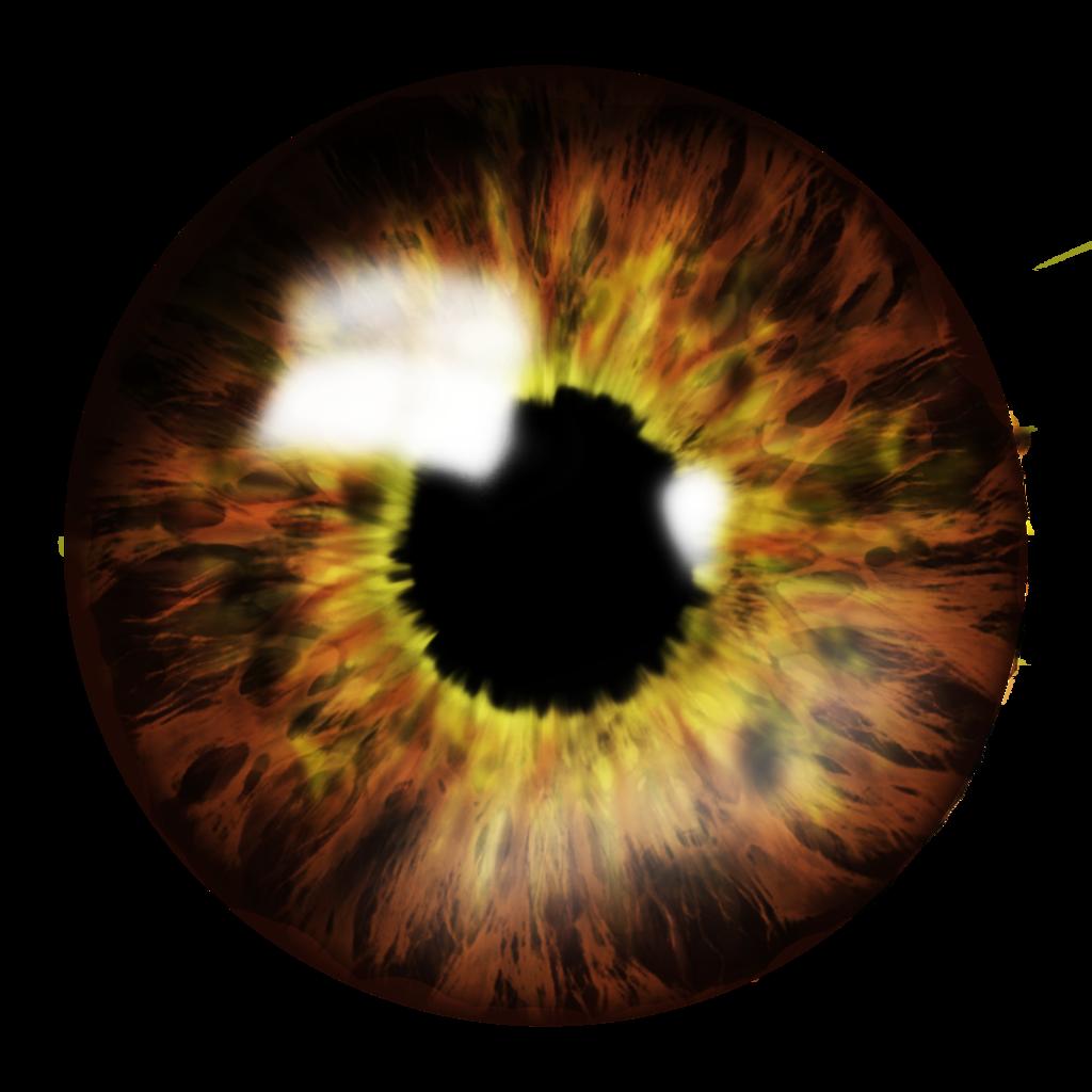 Eyes png image purepng. Eyeballs clipart eye optical