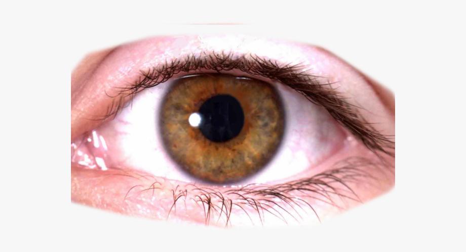 Brown eyes transparent background. Eyeballs clipart real