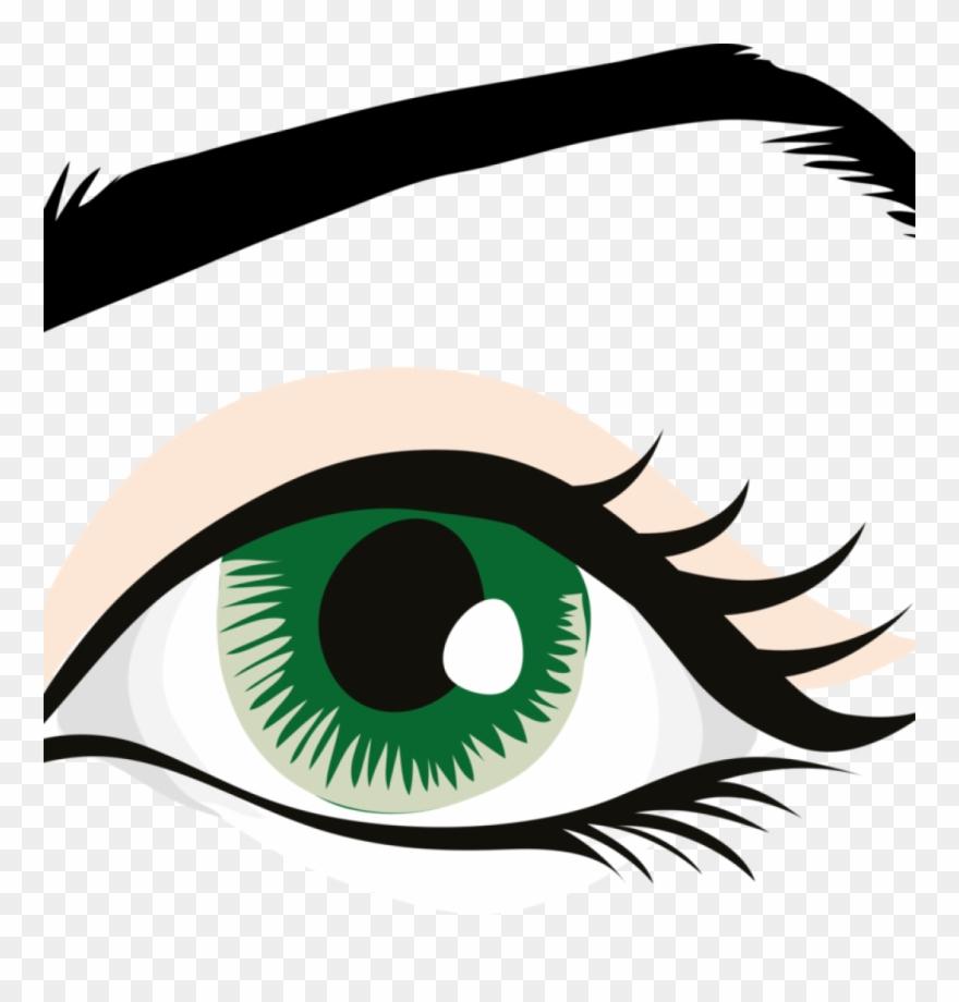 Human clip art eyelid. Eyebrow clipart 2 eye