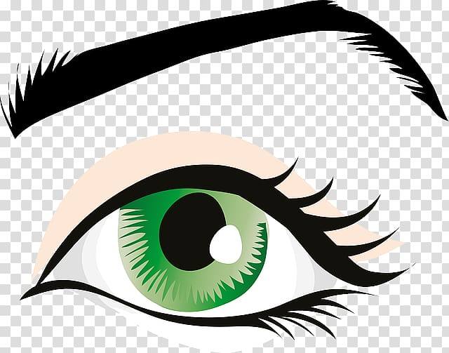 Eye color transparent background. Eyebrow clipart eyelid