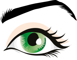 Free cliparts download clip. Eyebrow clipart part eye