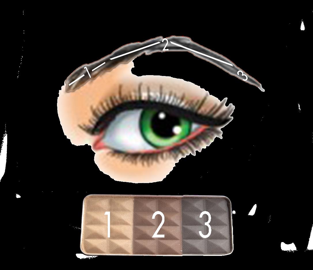 Eyebrow clipart thick eyebrow. Xhiaarrieta how to achieve