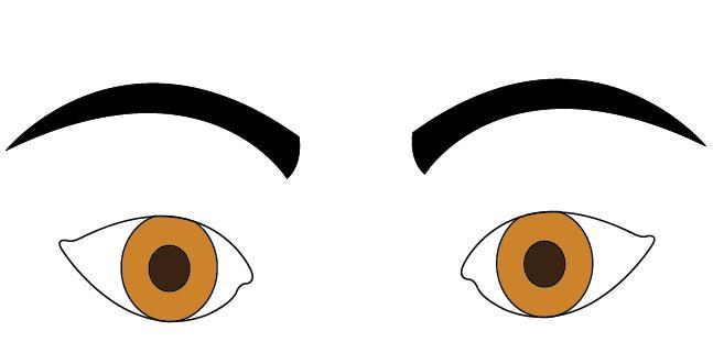 Eyebrow clipart thin eyebrow. Face reading eyebrows shapes