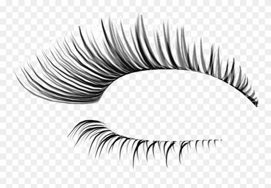 Eyelashes . Eyebrow clipart transparent background
