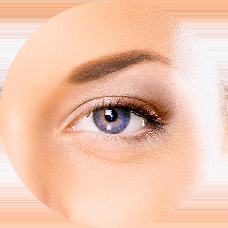 Eyelashes clipart cilia. Diagram of the eye