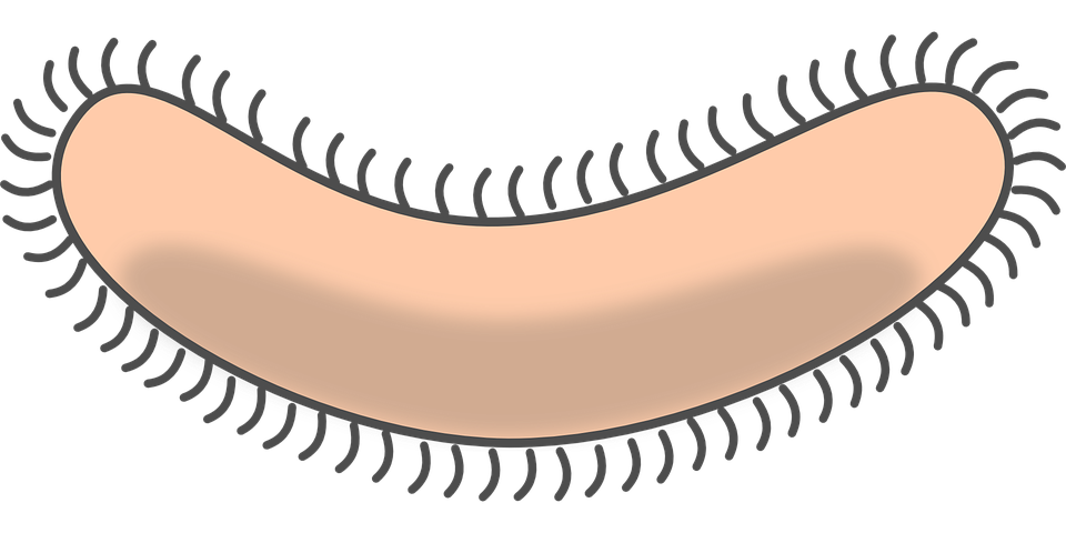 Eyelash clipart cute. Collection of bacteria cliparts