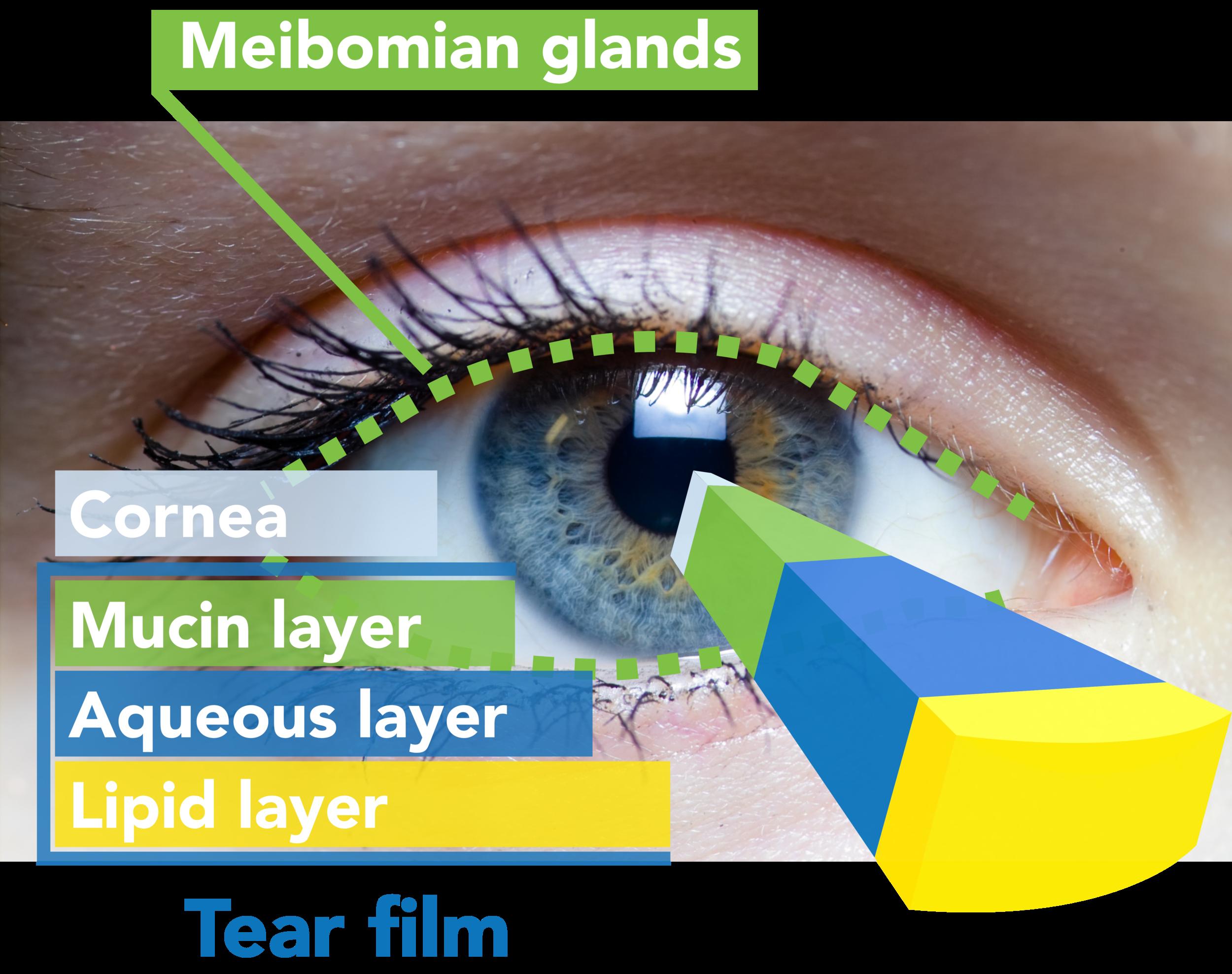 Eyelash clipart eye blink. Dry mineola eyecare