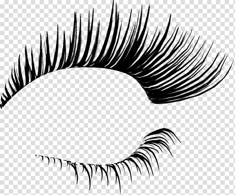 Eyelash extensions cosmetics transparent. Eyelashes clipart eyelid