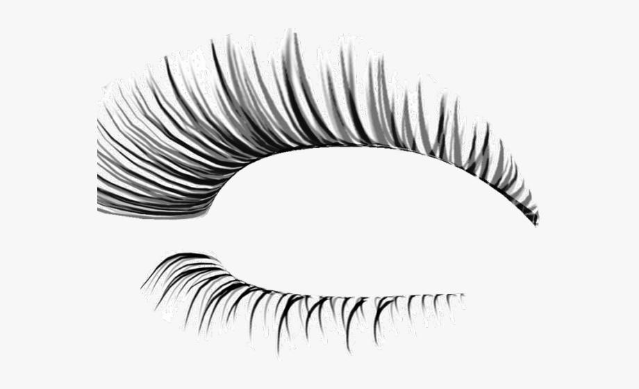 Eye lashes no background. Eyelash clipart realistic