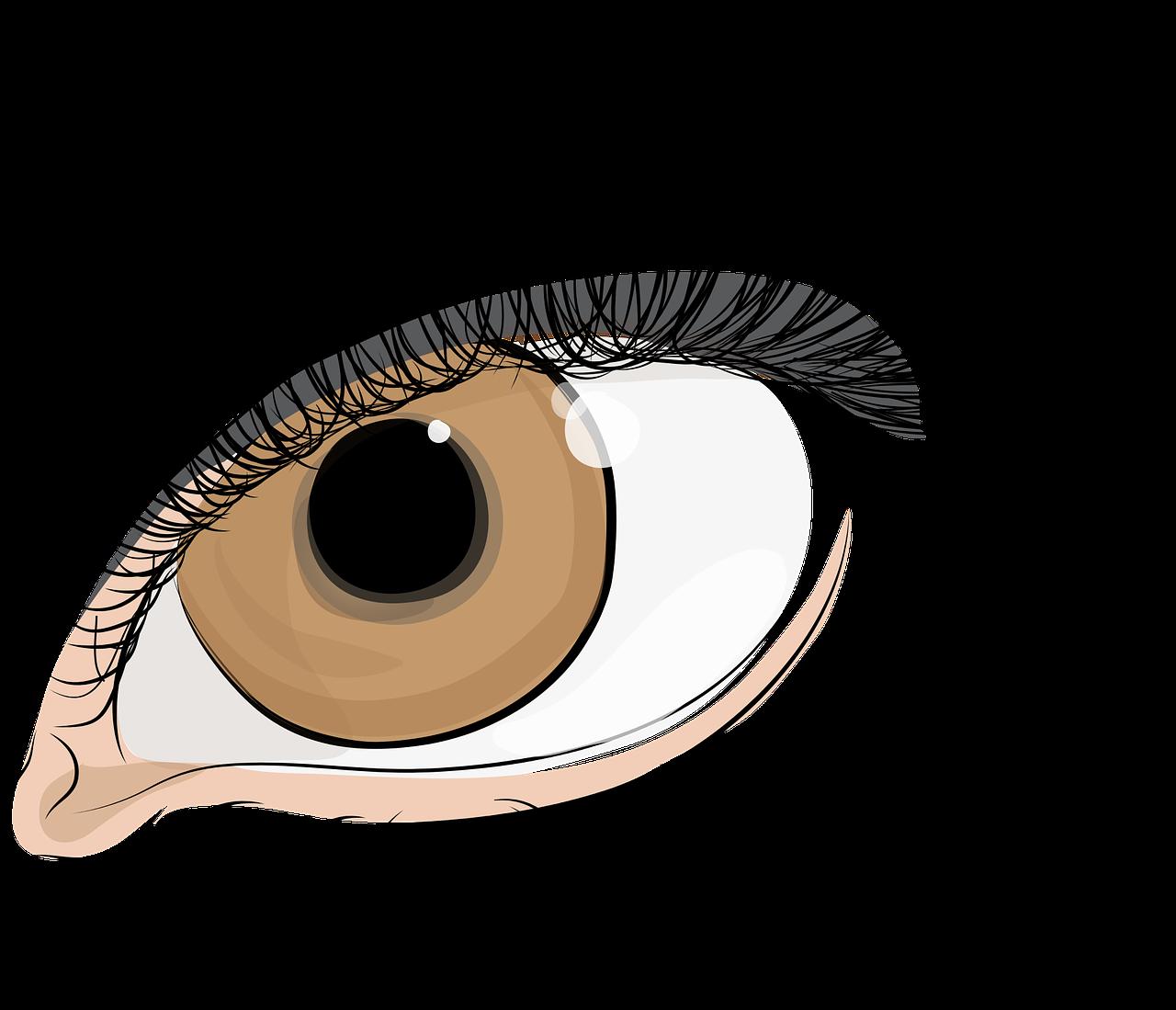 Eyelashes clipart file. The eye of women