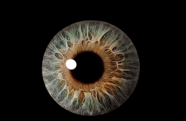 Best brown clipartion com. Eyes clipart eyesight