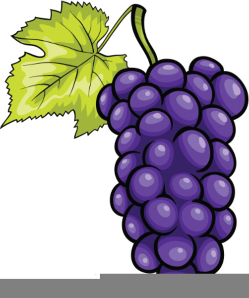 Grapes look at hq. Grape clipart pruple