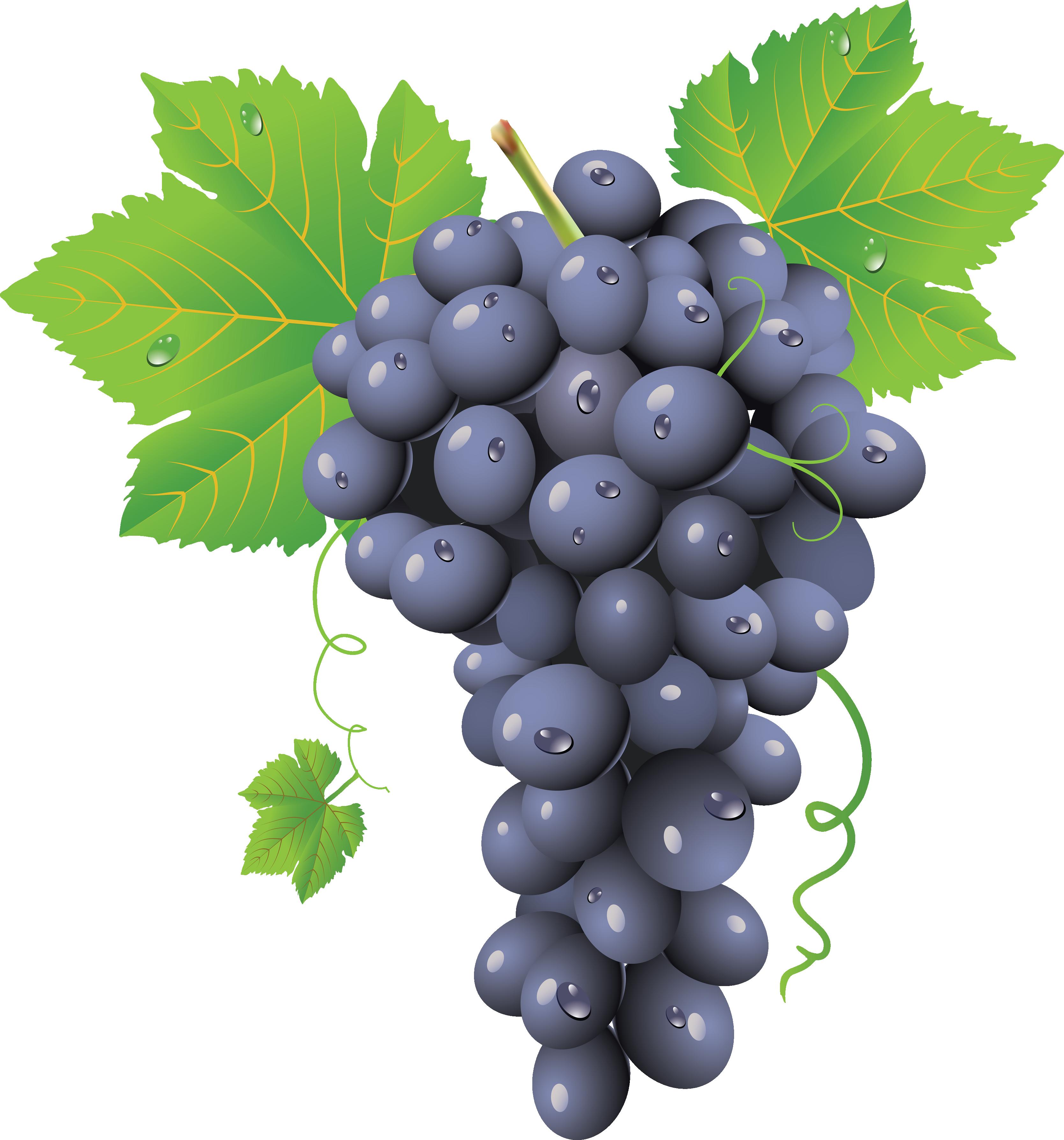 Grape twenty six isolated. Grapes clipart bread