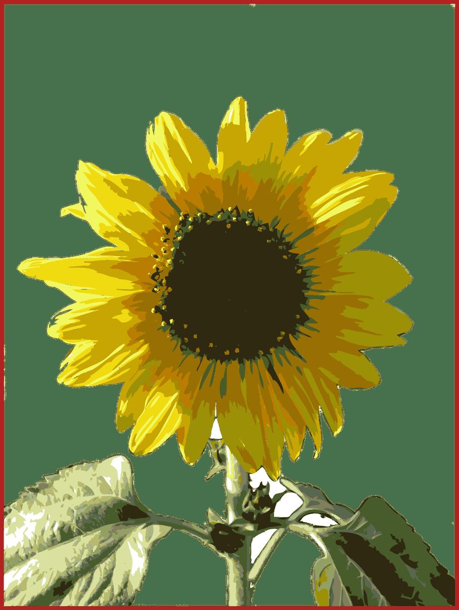 Incredible simple sunflower cartoon. Gardener clipart outline