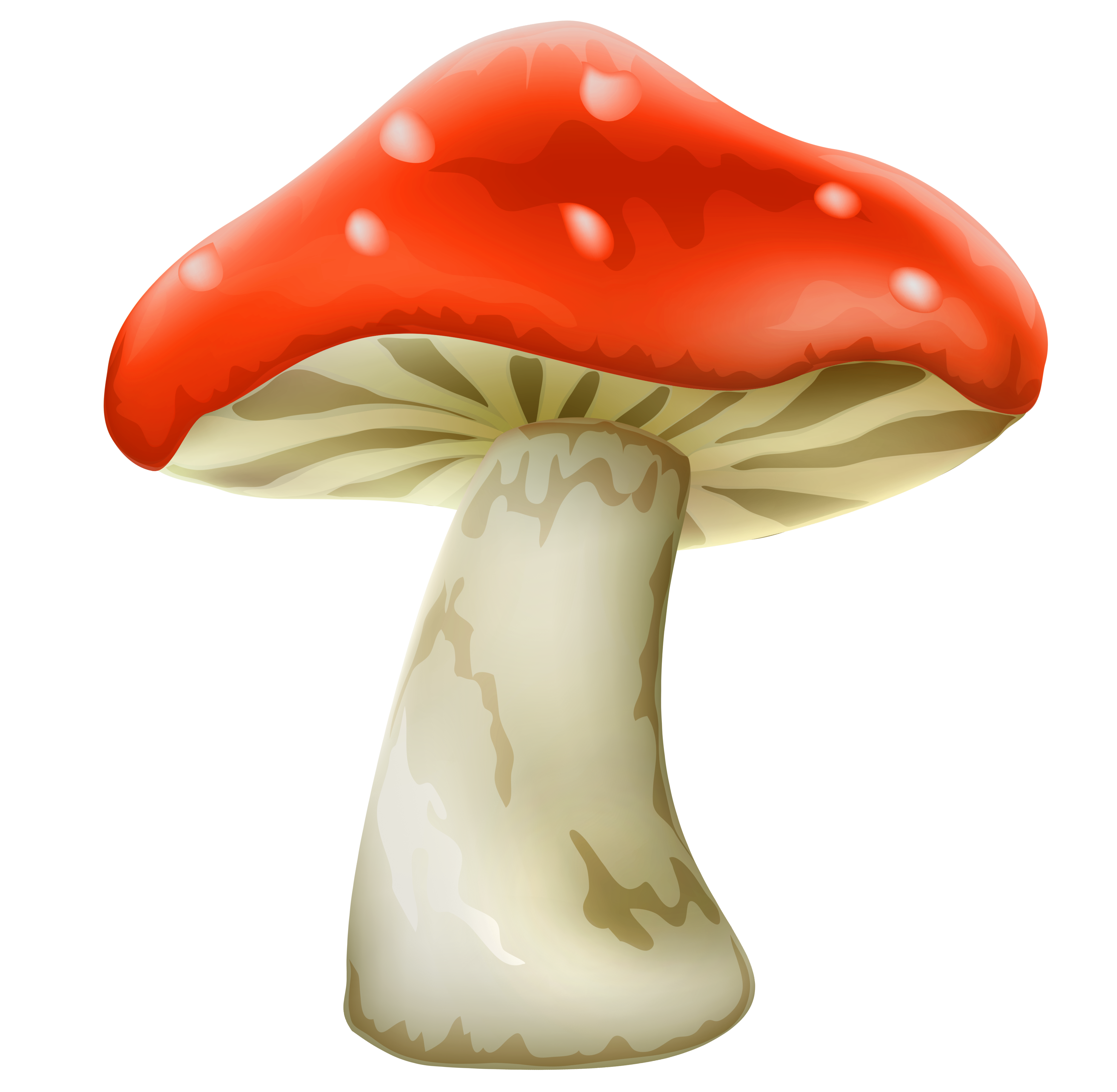 collection of mushroom. Fairy clipart toadstool