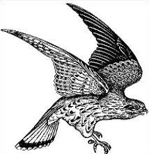 Falcon clipart. Free