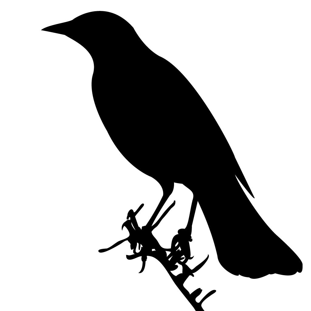 Falcon clipart bird habitat. Hawks and falcons browse