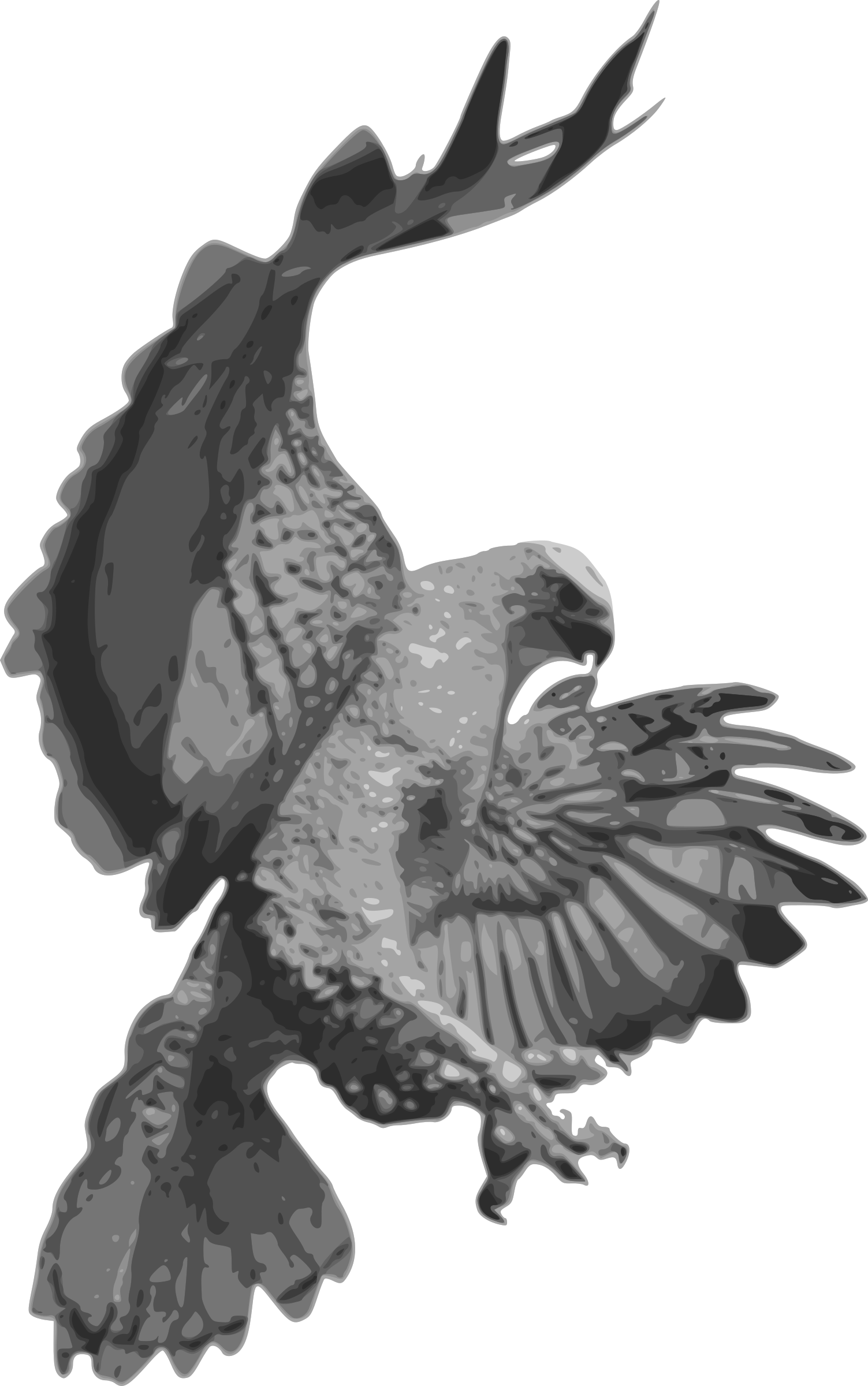 Falcon clipart blackhawk. Hawk page of clipartblack