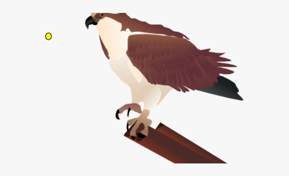 Falcon clipart chicken hawk. Osprey clip art cliparts
