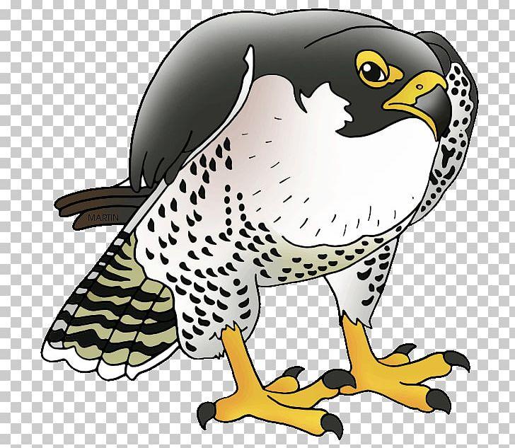 Peregrine cliparts stock . Falcon clipart cool