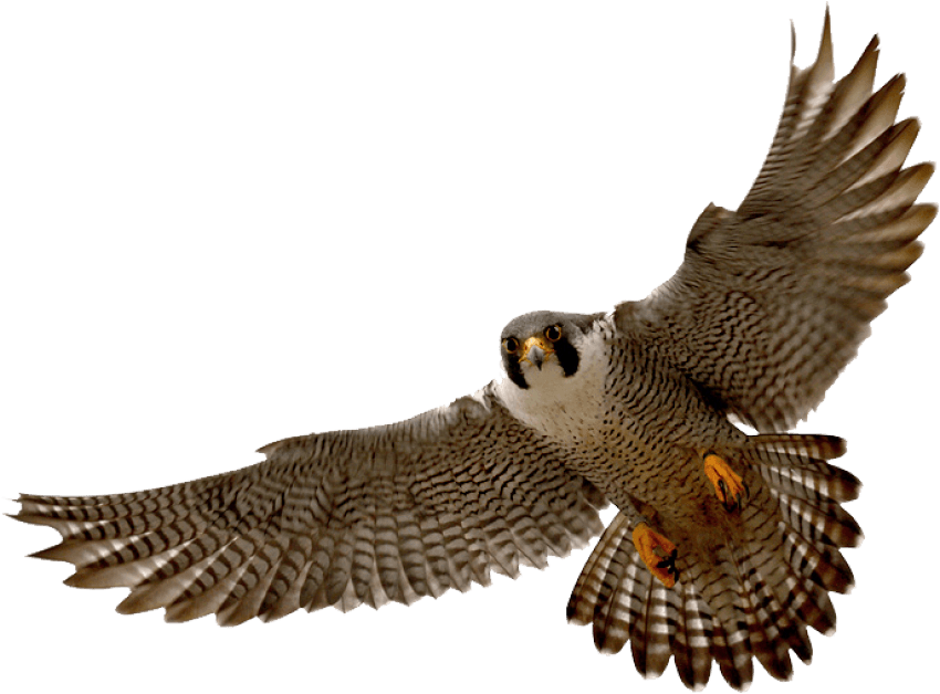 Falcon clipart cool. Png free images toppng