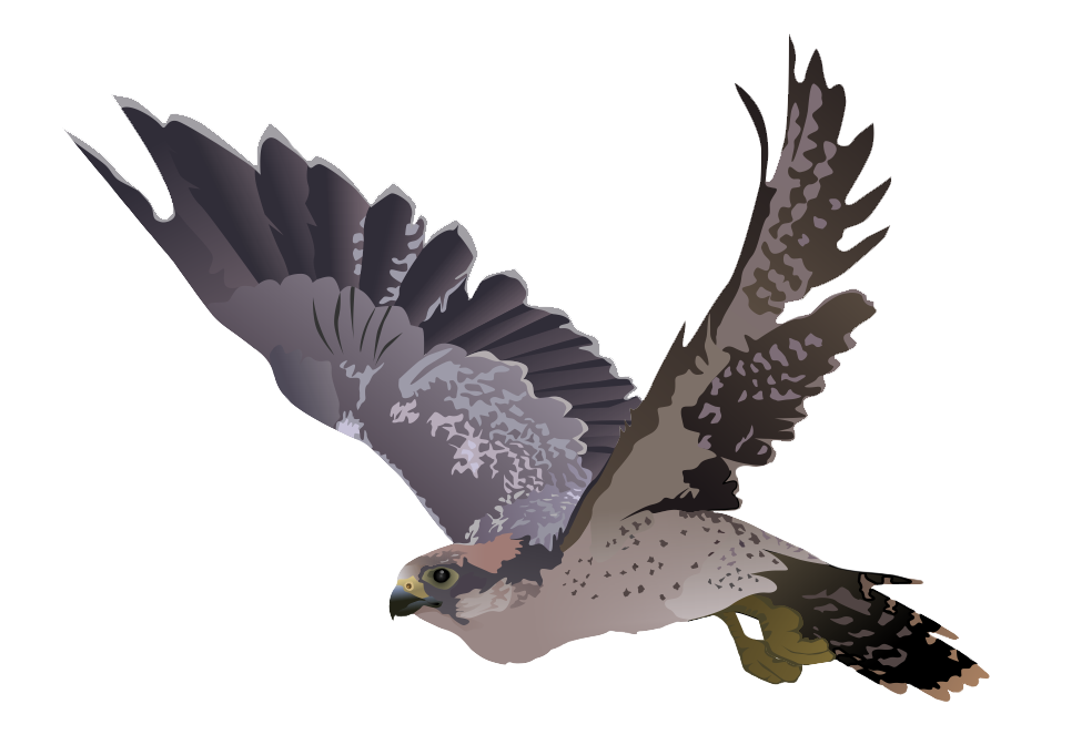 stickers png transparent. Falcon clipart creative