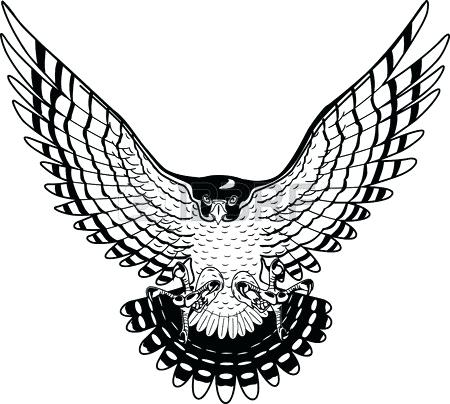 Collection of free download. Falcon clipart drawing