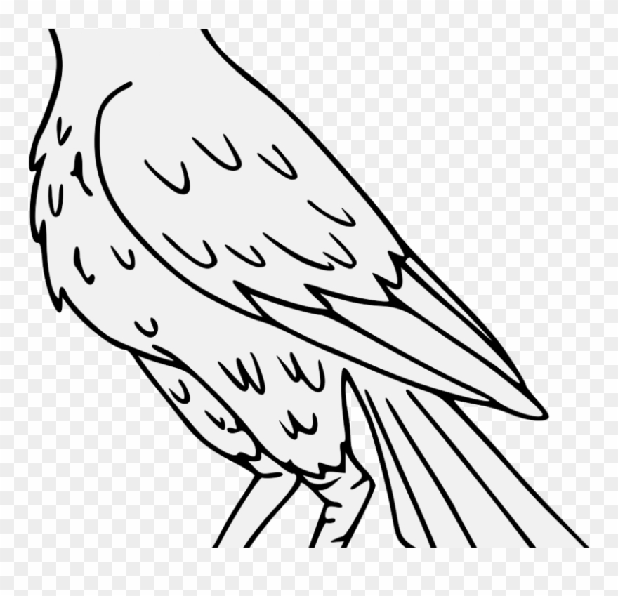 Falcon clipart drawing. Png pinclipart