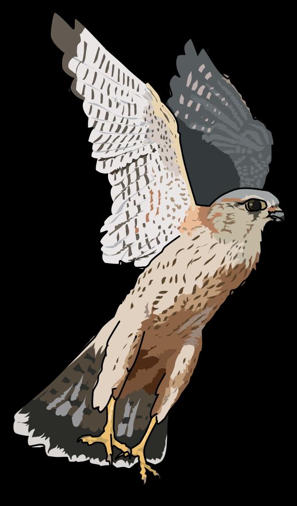 Falcon clipart falcon bird. Onlinelabels clip art faucon