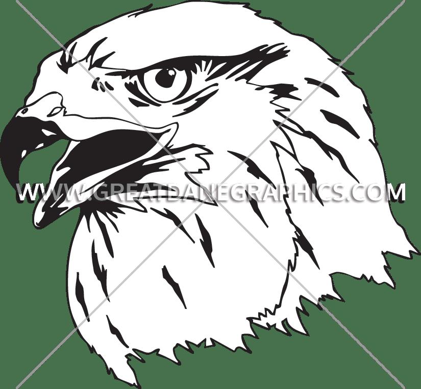 Drawing at getdrawings com. Falcon clipart falcon head