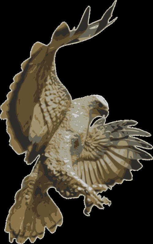 Falcon clipart flying falcon. Bird animal free photos