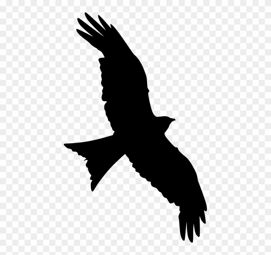 All photo png transparent. Falcon clipart flying falcon