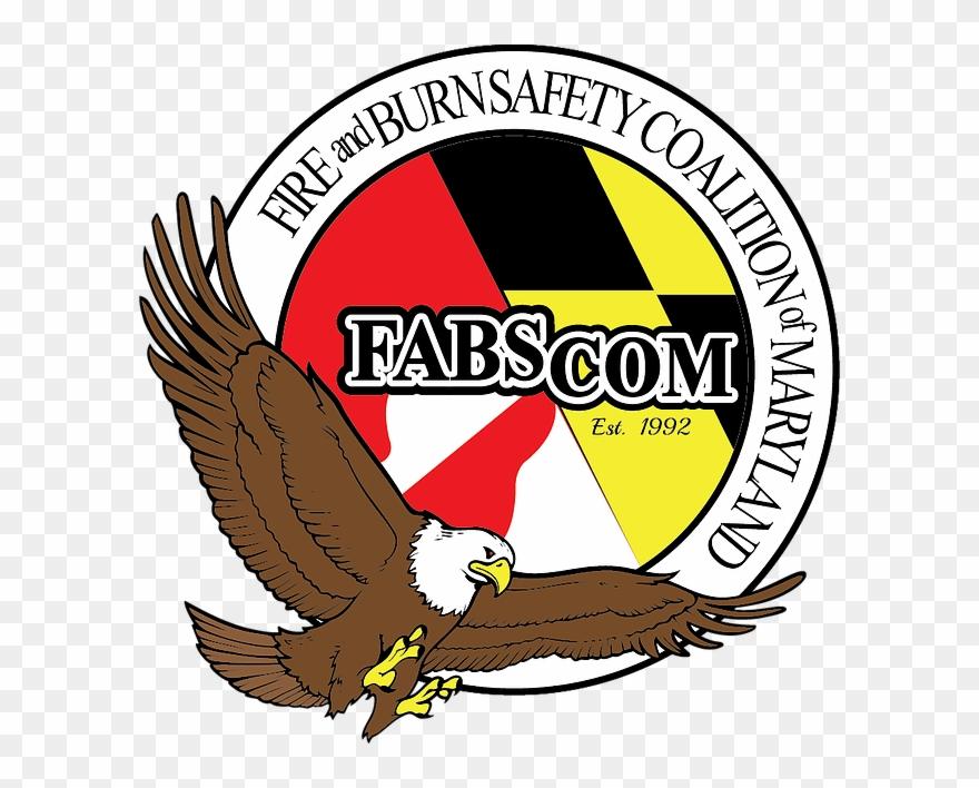 Png download . Falcon clipart golden hawk