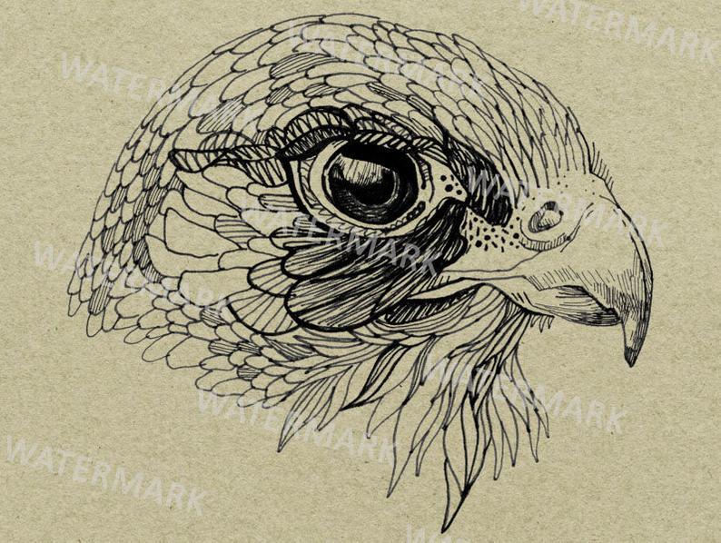 Falcon clipart hand. Drawn bird illustration line