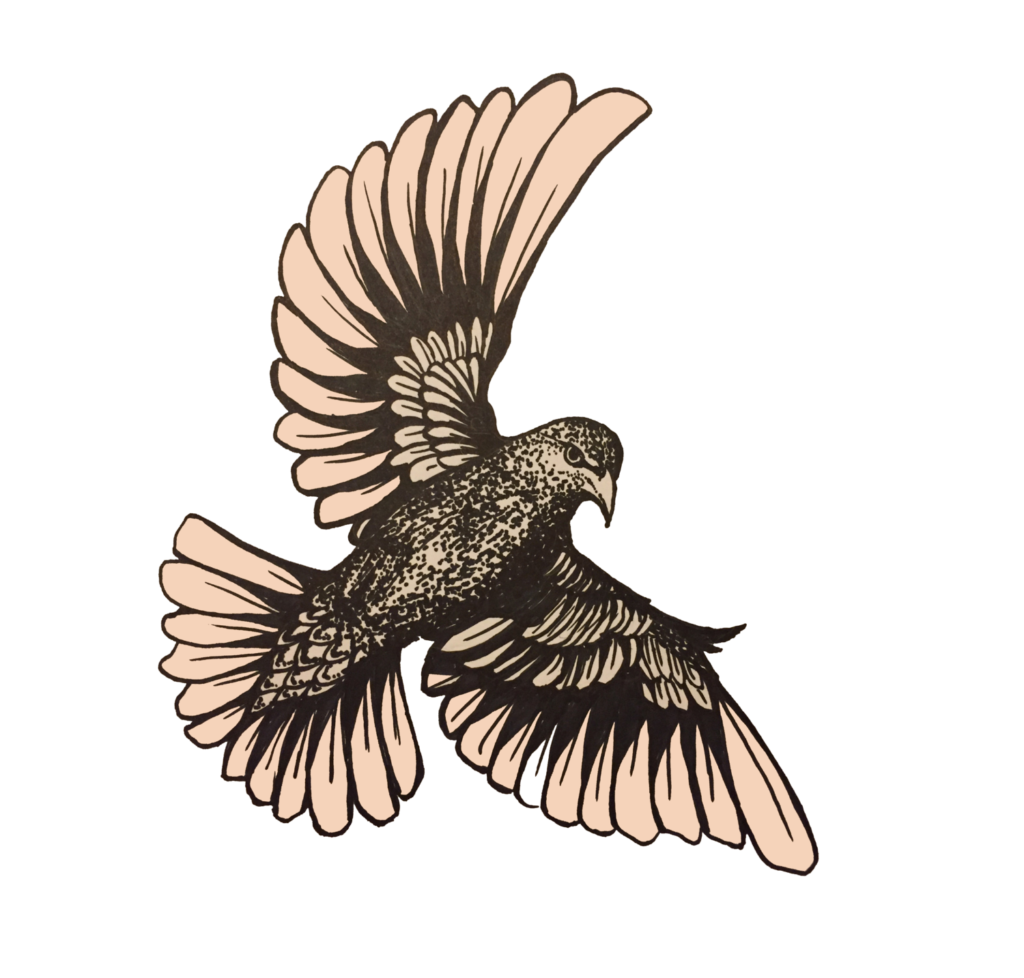 The starling project march. Falcon clipart harrier