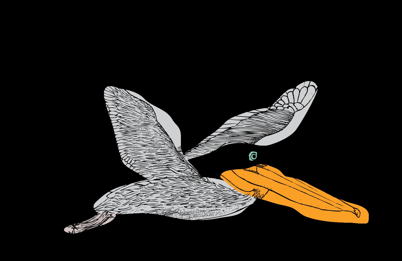 Falcon clipart harrier. Fun stuff sparkman design