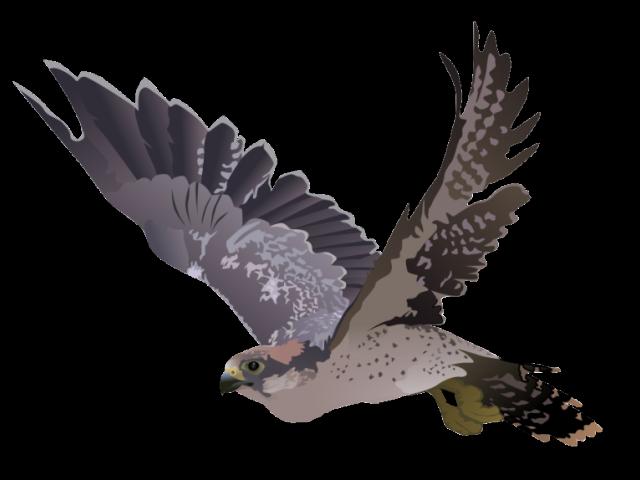 Free peregrine download clip. Falcon clipart harrier
