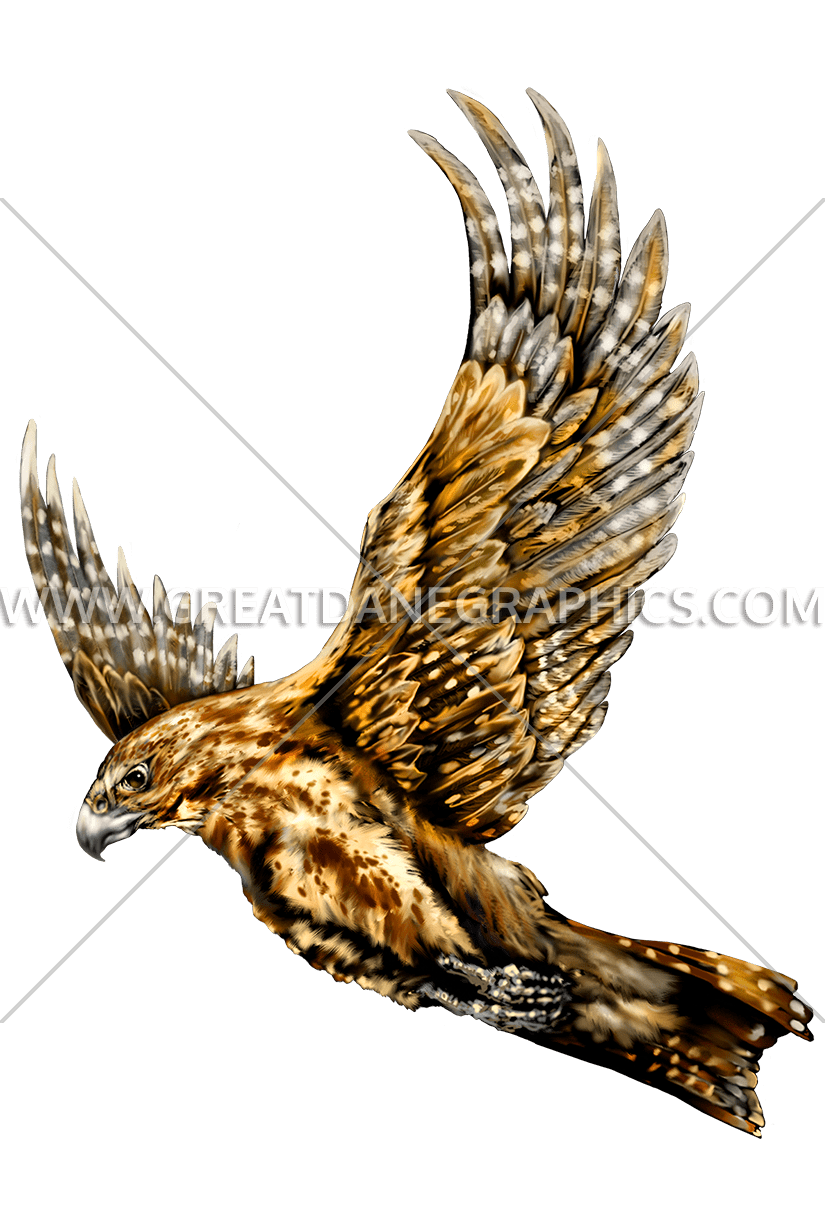 Flying production ready artwork. Falcon clipart harrier